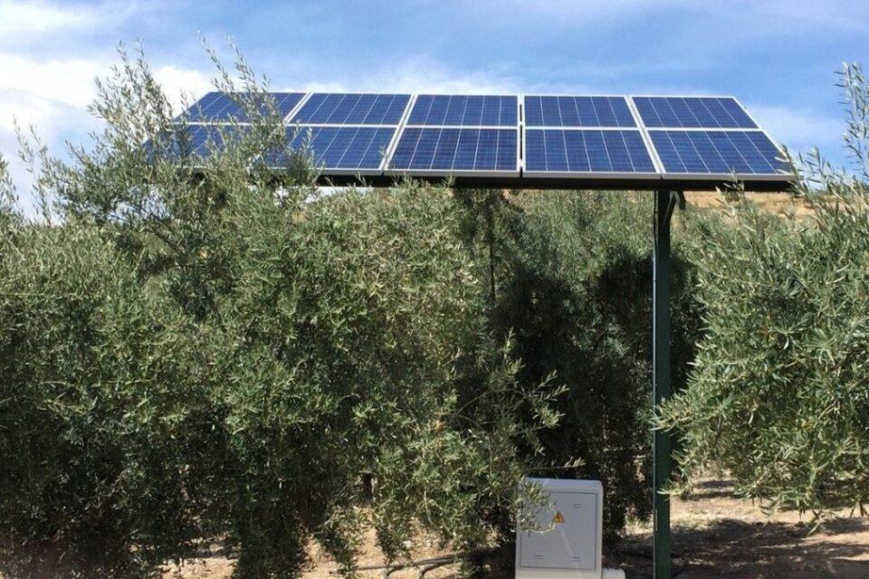Cuando te cuesta más una hectárea de paneles fotovoltaicos que llena de olivos