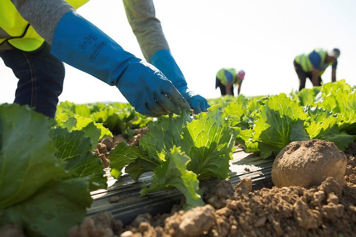 Programa de ayudas para actuaciones de eficiencia energética en explotaciones agropecuarias